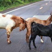 Dieren in het verkeer